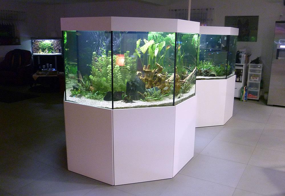 Aquarien und terrarien indiv gestalten aquariumbau for Fenetre 50 x 50
