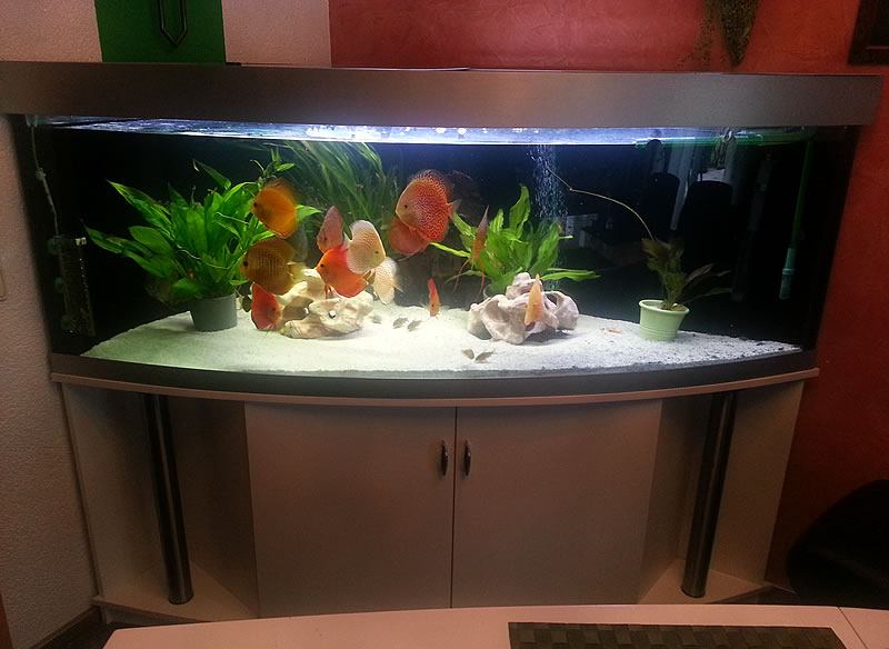 Unsere referenzen werden sie begeistern aquariumbau for Aquarium abdeckung