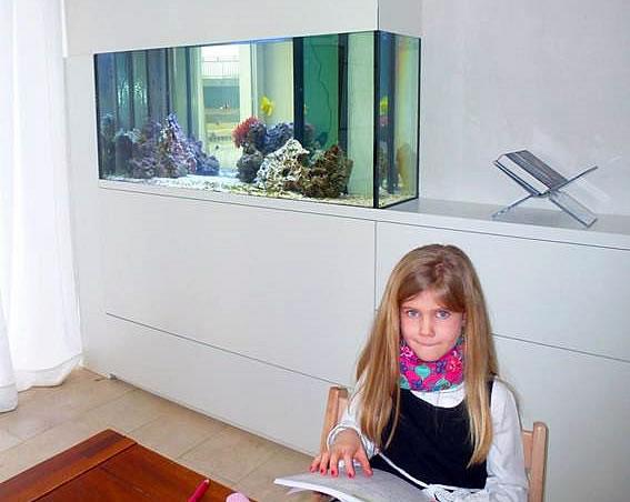 meerwasser aquarium als raumteiler aquariumbau ennigerloh
